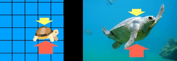 ウミガメにかかる圧力