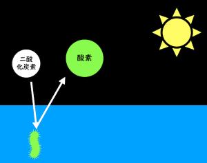 生物の光合成により、地球に酸素が供給された