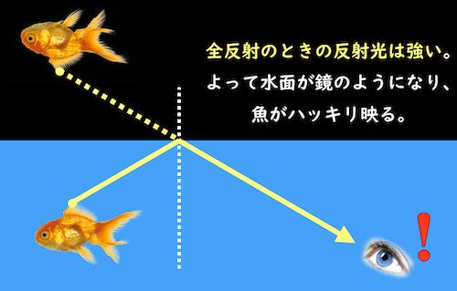 全反射で映る魚