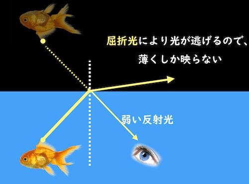 薄くしか映らない魚