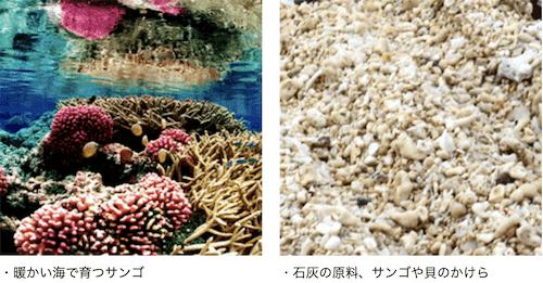 石灰石はサンゴなどからできる
