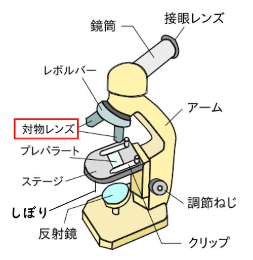 顕微鏡の対物レンズ