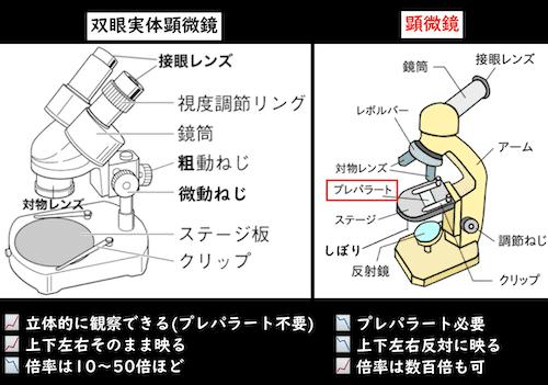 双眼実体顕微鏡と顕微鏡の違い