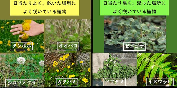 日当たりのよい場所に住む植物、日当たりの悪い場所に住む植物